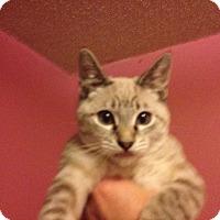 Adopt A Pet :: Zorro - Santa Rosa, CA