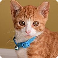 Adopt A Pet :: Nick - Monroe, NC