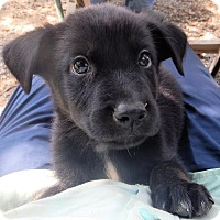 Adopt A Pet :: *Rudy - PENDING - Westport, CT