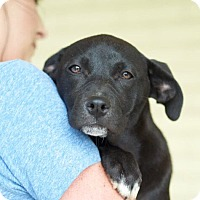 Adopt A Pet :: Sparkle - Knoxville, TN