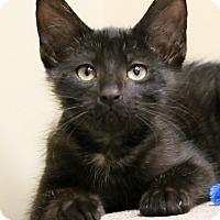 Adopt A Pet :: Diz - Chicago, IL