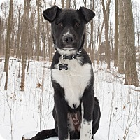 Adopt A Pet :: Aggie - Drumbo, ON
