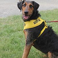 Adopt A Pet :: Elsa - Bedford Hills, NY