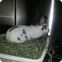 Adopt A Pet :: Venice - Alexandria, VA