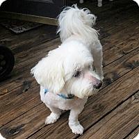 Adopt A Pet :: Buddy - Umatilla, FL