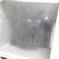 Adopt A Pet :: A064069 - Palmer, AK