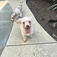 Adopt A Pet :: Alice - Baton Rouge, LA