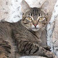 Adopt A Pet :: Ursula - St Louis, MO