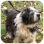 Photo 3 - Lhasa Apso/Terrier (Unknown Type, Small) Mix Dog for adoption in PRINCETON, New Jersey - Sophie