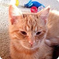 Adopt A Pet :: Frank - Green Bay, WI