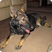 Adopt A Pet :: Sasha - Chattanooga, TN