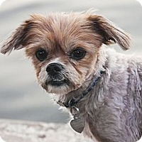 Adopt A Pet :: Ike - North Palm Beach, FL