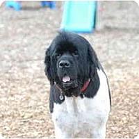 Adopt A Pet :: Dozzer - Ft. Myers, FL