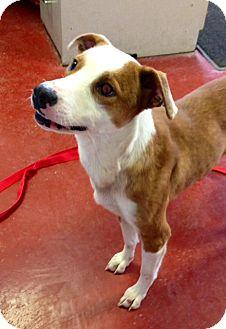 Terrier (Unknown Type, Medium) Mix Dog for adoption in Florence, Indiana - Nalah