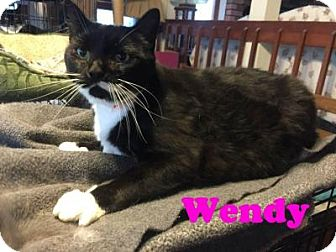 Domestic Shorthair Cat for adoption in East Stroudsburg, Pennsylvania - Wendy