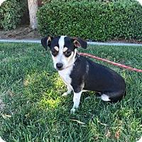 Adopt A Pet :: Dixie - Bakersfield, CA