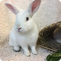 Adopt A Pet :: Gimble - Paramount, CA