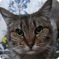 Adopt A Pet :: Skittles - Witter, AR