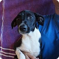 Adopt A Pet :: Ruby - Oviedo, FL