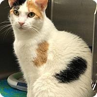 Adopt A Pet :: Summer - Arlington/Ft Worth, TX
