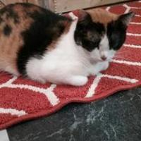 Adopt A Pet :: Miss Kitty - Floresville, TX