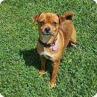Adopt A Pet :: Bubbles - Oakland, MI