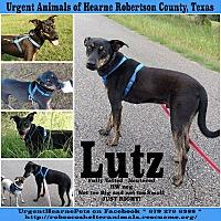Adopt A Pet :: Lutz - Hearne, TX