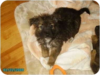 Terrier (Unknown Type, Small) Mix Puppy for adoption in Yorkville, Tennessee - Barrett
