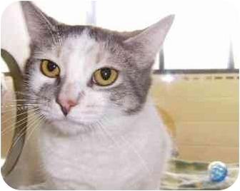 Domestic Shorthair Cat for adoption in Walker, Michigan - Piggy