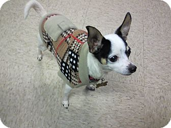 Chihuahua Mix Dog for adoption in McDonough, Georgia - Lily