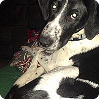 Adopt A Pet :: Buddy - Courtesy Posting - New Canaan, CT