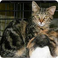 Adopt A Pet :: Tabbies - Cincinnati, OH