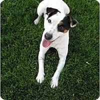 Adopt A Pet :: PEPPER - Scottsdale, AZ