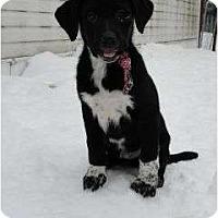 Adopt A Pet :: Taz - Surrey, BC