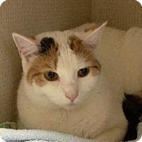 Adopt A Pet :: PATCHES - 2015 - Hamilton, NJ