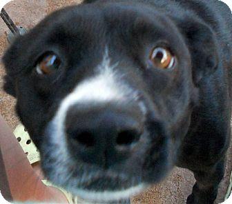 Border Collie Mix Dog for adoption in Oakley, California - Darci