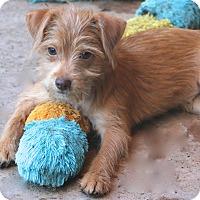 Adopt A Pet :: Fajita - Norwalk, CT