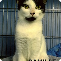 Adopt A Pet :: Camille - Medway, MA