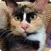 Adopt A Pet :: Roxie - Edmond, OK