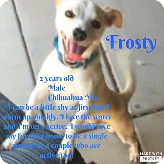 Chihuahua Mix Dog for adoption in Phoenix, Arizona - Frosty