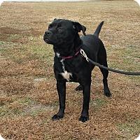 Adopt A Pet :: ONYX - Wilmington, NC