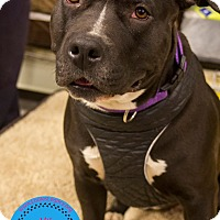 Adopt A Pet :: Erin - Staten Island, NY