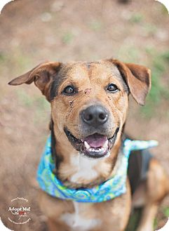 Hound (Unknown Type) Mix Dog for adoption in Kingwood, Texas - Ajax