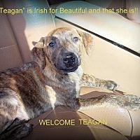 Adopt A Pet :: Teagan - Girard, GA