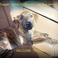 Labrador Retriever/Terrier (Unknown Type, Medium) Mix Puppy for adoption in Girard, Georgia - Teagan