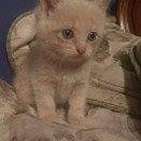 Adopt A Pet :: TERRI - Hampton, VA