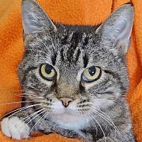 Adopt A Pet :: Millie - Renfrew, PA