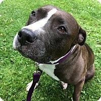 Adopt A Pet :: Abi - Lindsey - Kalamazoo, MI