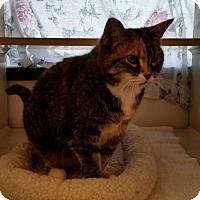 Adopt A Pet :: Molly - Monticello, IA