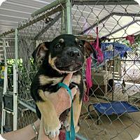 Adopt A Pet :: Wags - Hohenwald, TN
